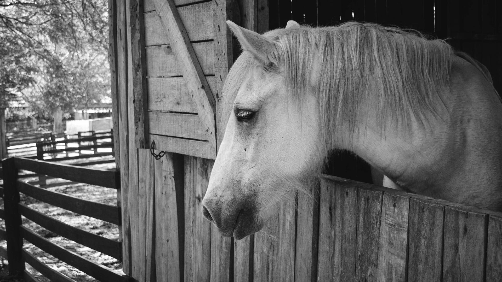 Gyvūnų gerovės moksliniai tyrimai ir edukacija