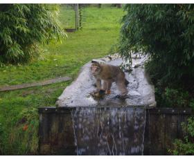 Kai kurios beždžionės mėgsta vandenį