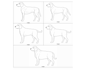 Šunų gerovė