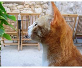 Gyvūnų gerovės idėjų sklaida, su gyvūnų gerove susijusios praktinės veiklos populiarinimas